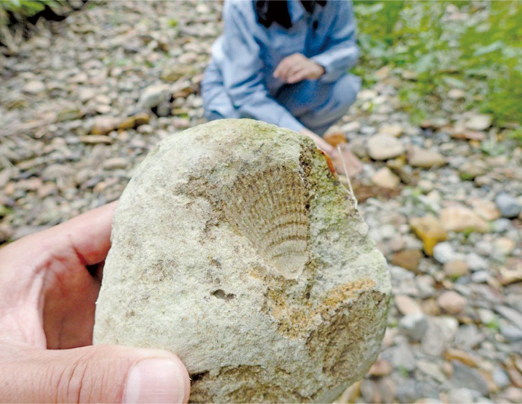 化石分布地