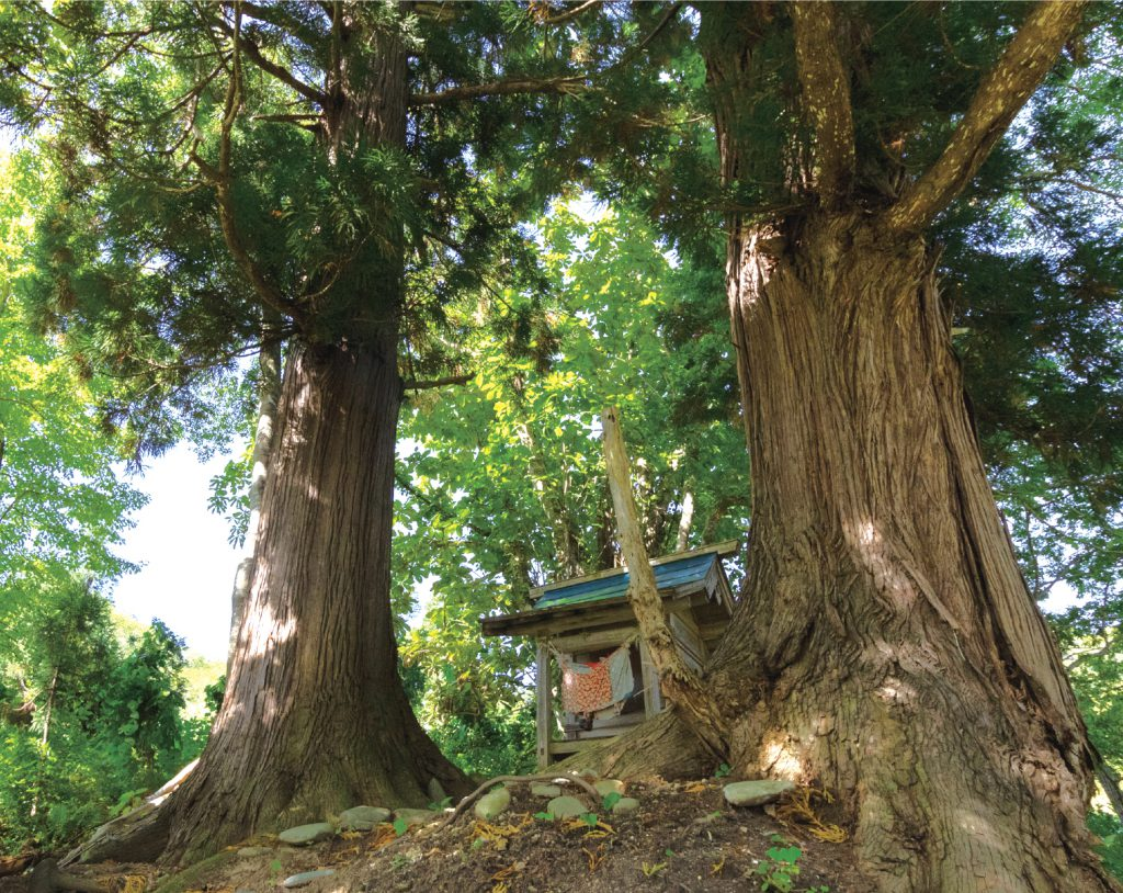 山神と巨木